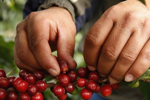 Haute Cup Constanta - Blog online despre cafeaua de specialitate